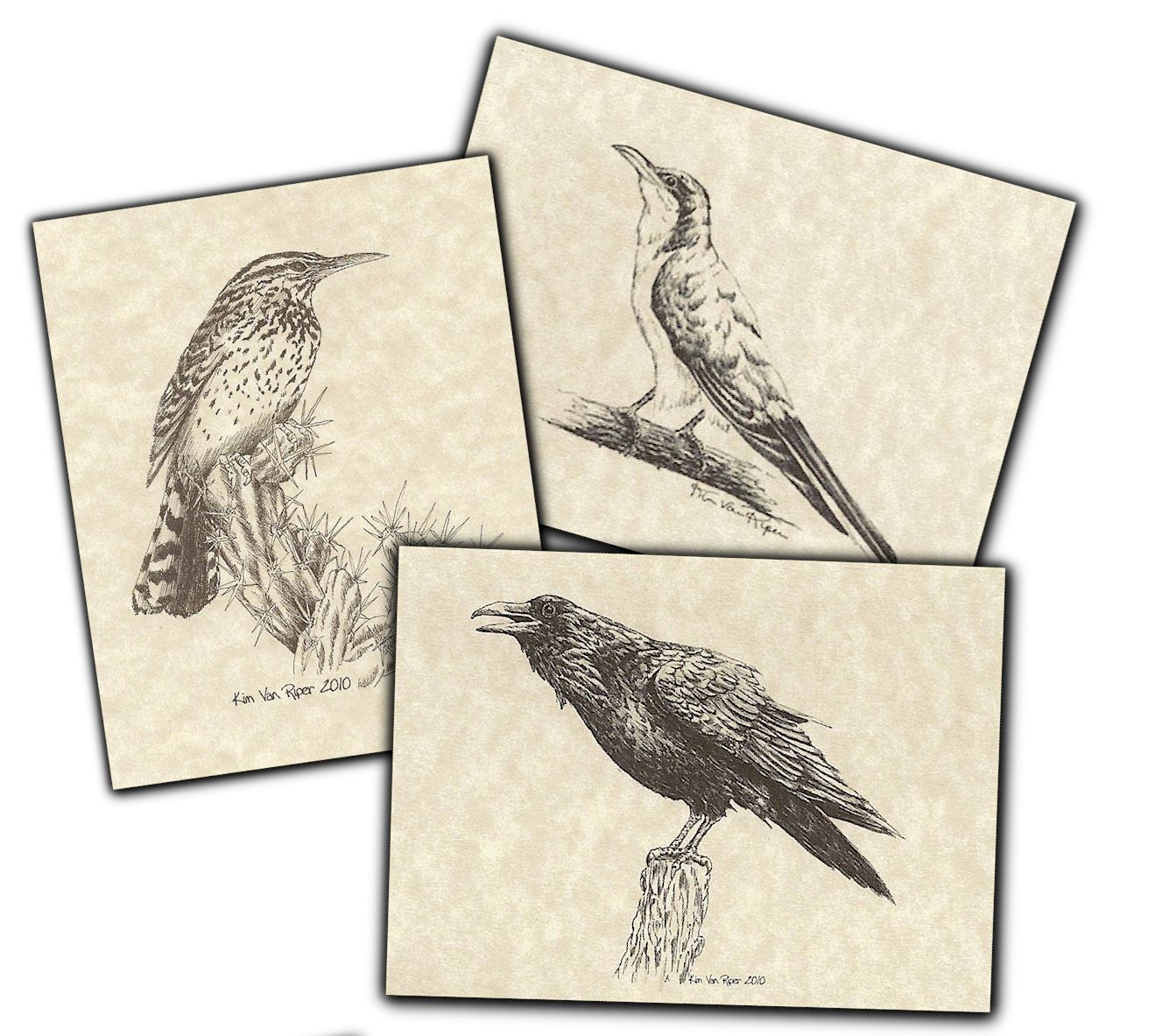 Notecards - Birds of the Southwest