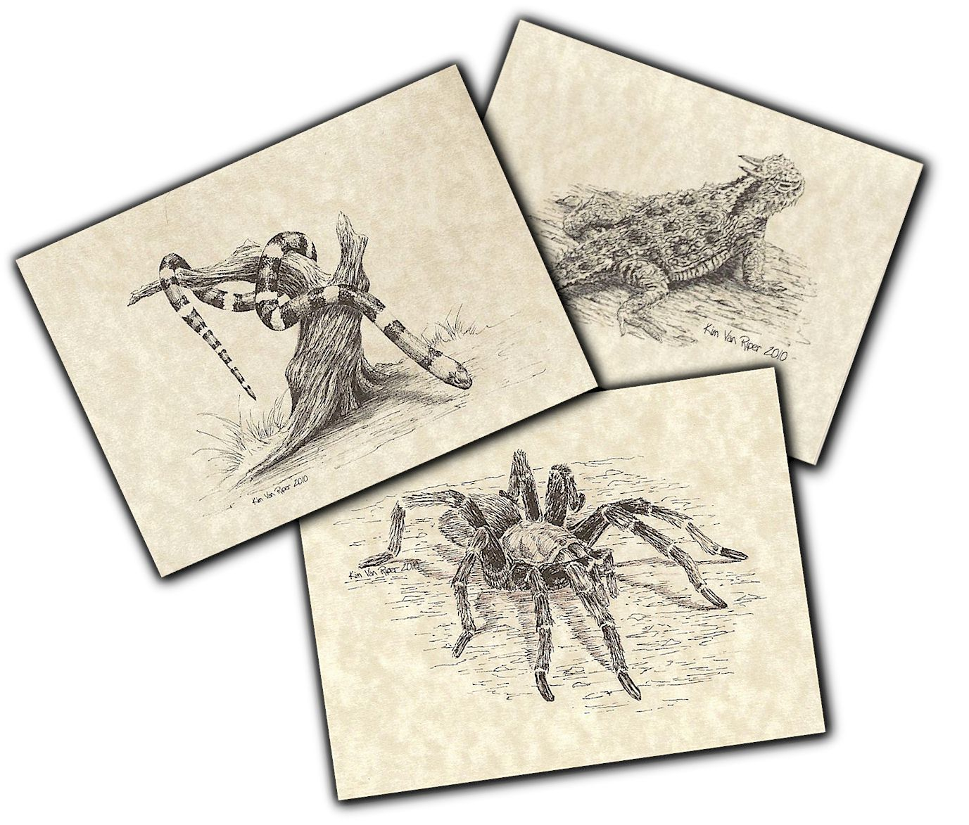 Notecards - Creatures of the Desert