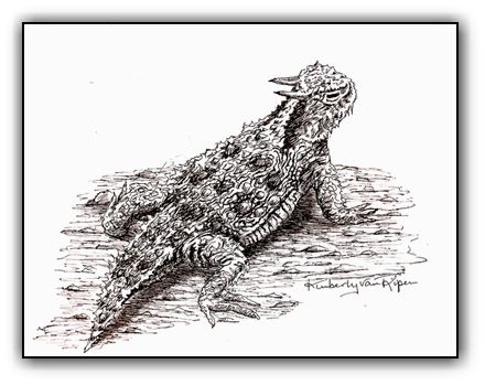 Desert Horned Toad<br>Pen and Ink Illustration