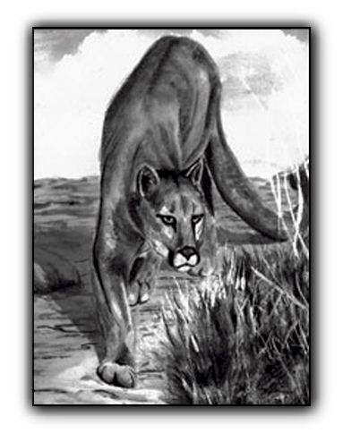 Mountain Lion <br>Pen and Ink on Paper <br>(5 x 7)