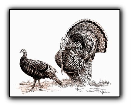 Wild Turkeys <br>Original Pen and Ink Illustration